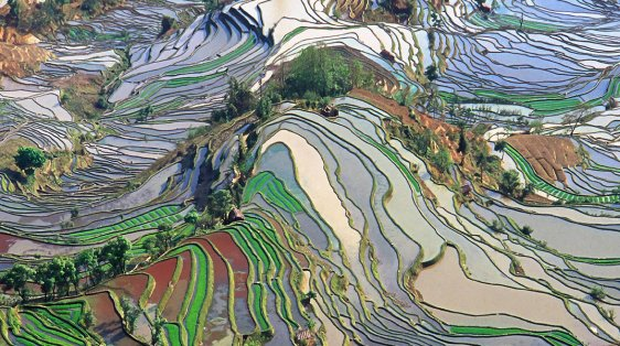 World Environment Day- terracing fields
